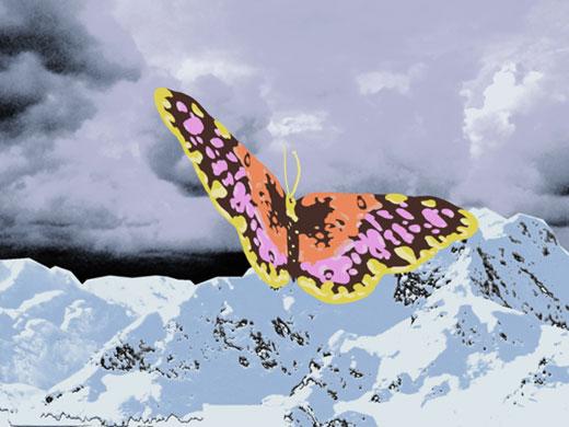 butterfly_b03